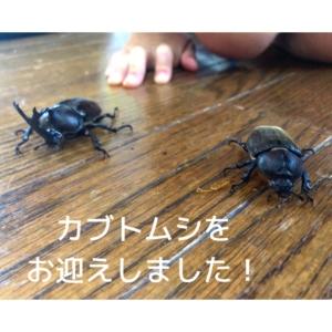 【一年越しの約束】この夏、カブトムシをお迎えしました!